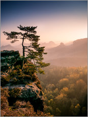 Wall sticker  Lonely Tree at Sunrise - Andreas Wonisch