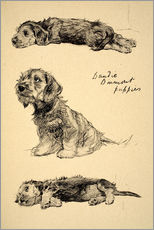 Wall sticker  Dandie Dinmont Puppies - Cecil Charles Windsor Aldin