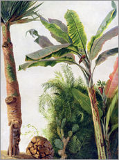 Gallery print  Banana Tree - Frederic Edwin Church