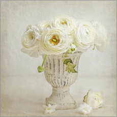 Wall sticker  white ranunculus - Lizzy Pe