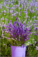 Gallery print  Lavender in metal bucket - Thomas Klee
