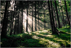 Gallery print  Light rays in the forest - Oliver Henze