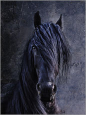 Wall sticker  The Friesian - Joachim G. Pinkawa