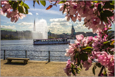 Wall Stickers  Cherry on the Alster in Hamburg for Spring - Dennis Stracke