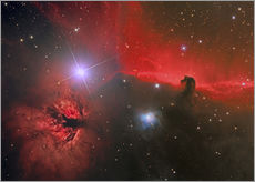 Wall Stickers  Horsehead Nebula, constellation Orion - Reinhold Wittich