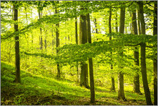 Gallery print  beech wood - Oliver Henze