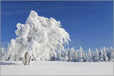 Wall sticker  Black Forest Winter Landscape - Markus Lange