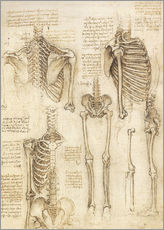 Wall sticker  Anatomy study, skeletal - Leonardo da Vinci