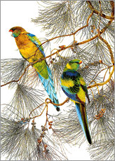 Wall sticker  Parakeet 6