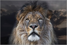 Gallery print  face to face with a king - Joachim G. Pinkawa