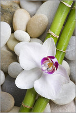 Wall sticker  Bamboo and orchid - Andrea Haase Foto
