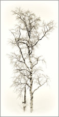 Canvas print  birch - GUGIGEI