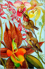 Wall sticker  Exotic birds on orchids