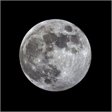 Wall sticker  Full moon - MonarchC
