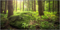 Gallery print  Forest and sunshine - Oliver Henze