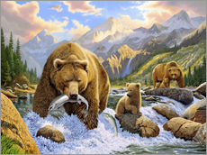Gallery print  Bear fishes salmon - Chris Hiett