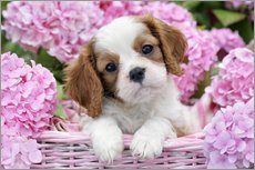 Wall sticker  Pup in Pink Flowers - Greg Cuddiford
