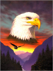 Gallery Print  Eagle - Chris Hiett