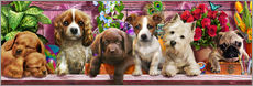 Gallery Print  Ceaco Puppies - Adrian Chesterman