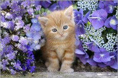 Wall Stickers  Ginger cat in flowers - Greg Cuddiford