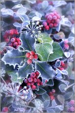 Gallery Print  Holly with hoarfrost - Simon Kayne