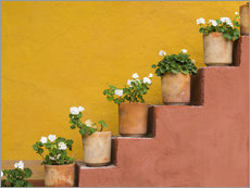 Gallery Print  Potted flowers on staircase - Don Paulson