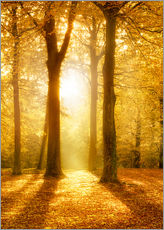 Wall Sticker  Golden autumn forest in sunlight - Jan Christopher Becke