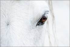 Wall sticker  Eye of the horse - Andreas Kossmann