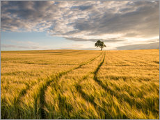 Gallery Print  Lonely Tree in Field - Andreas Wonisch
