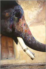 Wall sticker  Painted Indian elephant - Dave Bartruff