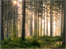 Gallery print  Sunlight in fall forest - Andreas Wonisch