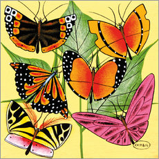 Gallery print  Colorful Butterflies - Kambili
