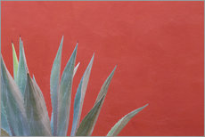Agave plant next to colorful wall