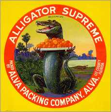 Alligator Supreme