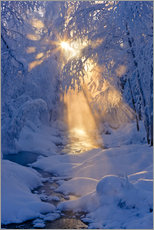 Stream in a winter forest