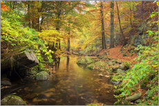 Little brook in autumn forest
