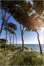 Tall Trees at the Baltic Sea