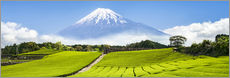 Mount Fuji and tea fields in Shizuoka, Japan