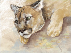 Captived Mountain Lion