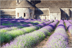 Famous Senanque abbey with its lavender field, Provence, France
