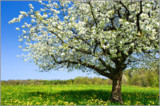 Blossoming trees in spring rural meadow