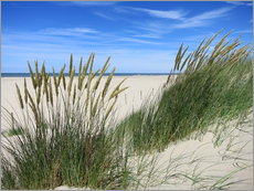 thriving beach grass in the dunes