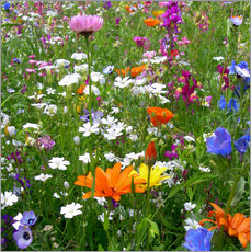 Flowers Meadow