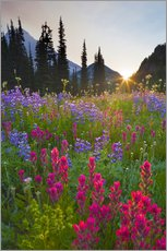Flower meadow at sunrise