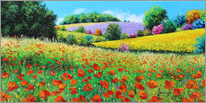 Flower meadow in the province
