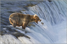 Brown bear with jumping red salmon