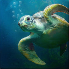 Bubbles, the cute sea turtle