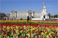 Buckingham Palace and Queen Victoria Monument with tulips, London, England, United Kingdom, Europe