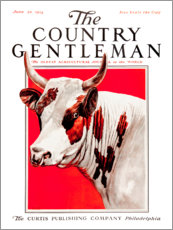 Country Gentleman (Cow)