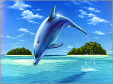 Mid-day dolphin